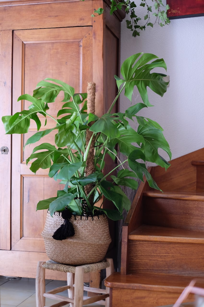 Decoration Avec Plantes Grasses une jungle urbaine dans votre intérieur
