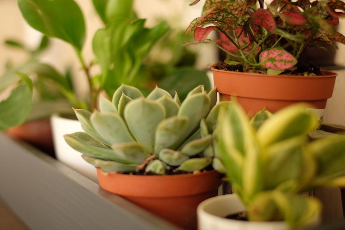 succulentes - plantes-décoration-intérieur